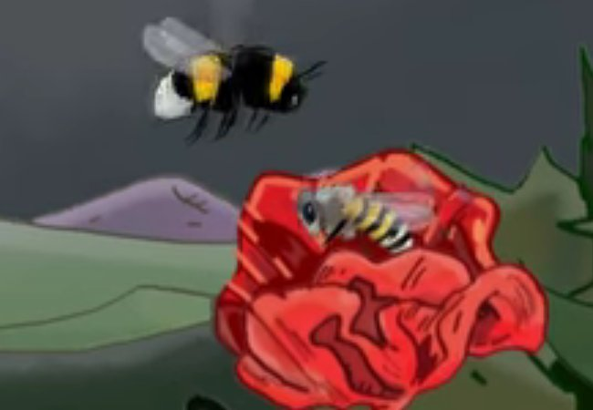 Le vol du bourdon (Flight of the bumblebee)